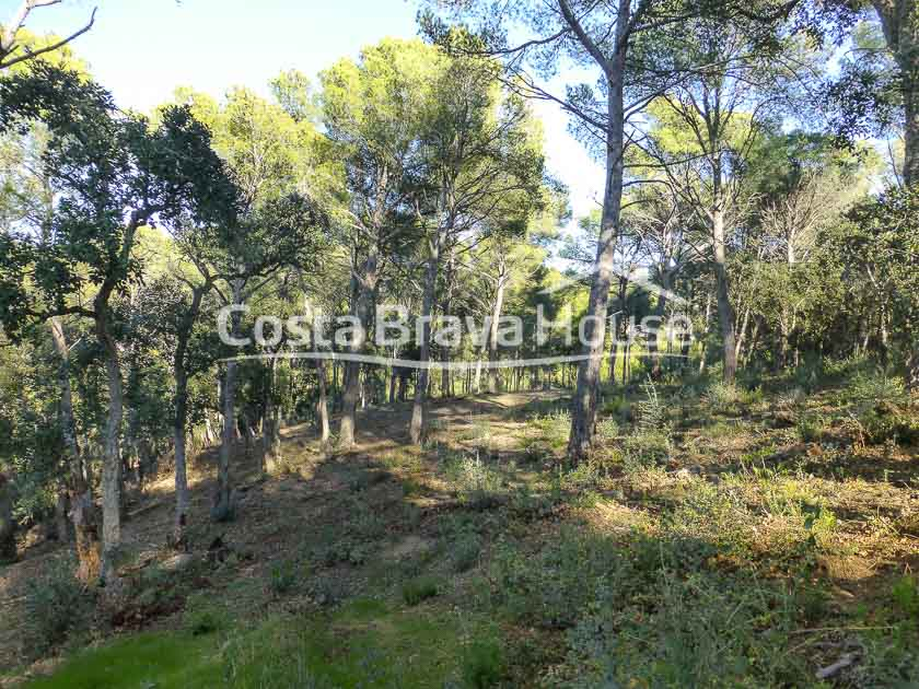 6-plot-of-3500-m2-of-buildable-land-for-sale-in-tamariu-costa-brava-r